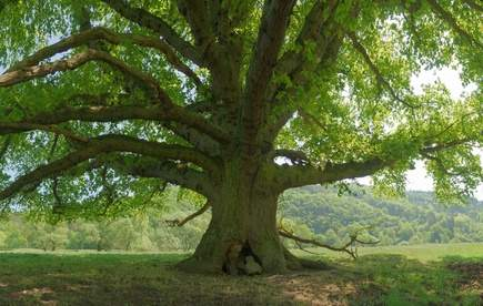 I plant a tree to neutralise the carbon footpring of my blog